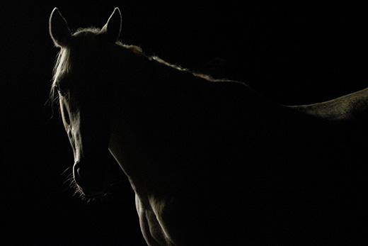 cheval12grand1.jpg